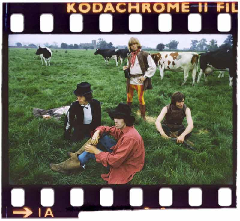 The Rolling Stones & Cows, Derbyshire, 1968