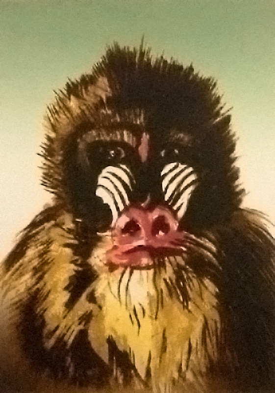 Endangered Species Suite - Mandrill, 1995