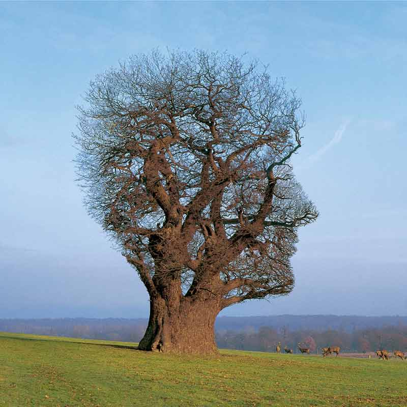 Pink Floyd, Tree of Half Life, 1997