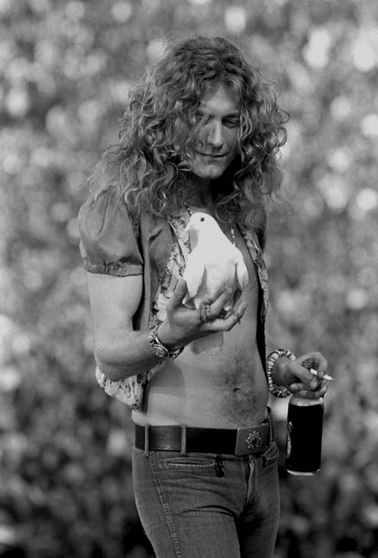 Robert Plant With Dove, San Francisco, 1973