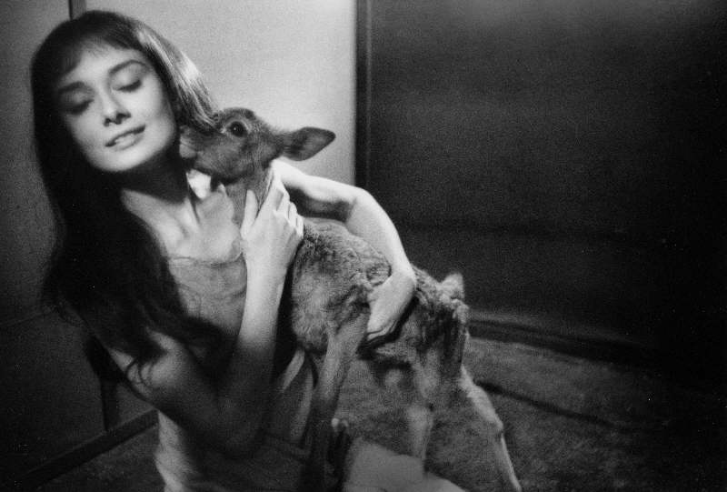 Audrey Hepburn With a Deer on the Set of Green Mansions, 1958